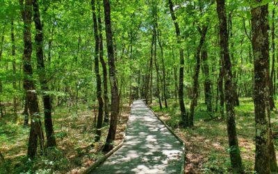 Forêt de Buzet
